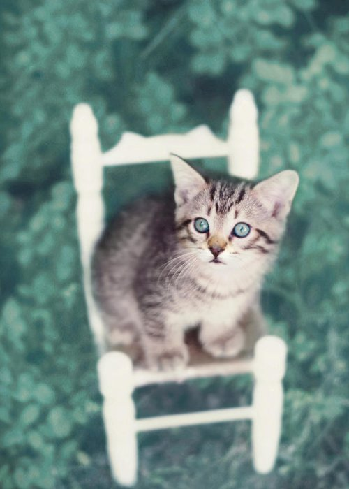 Kitten Photography Greeting Card featuring the photograph Time Out by Amy Tyler