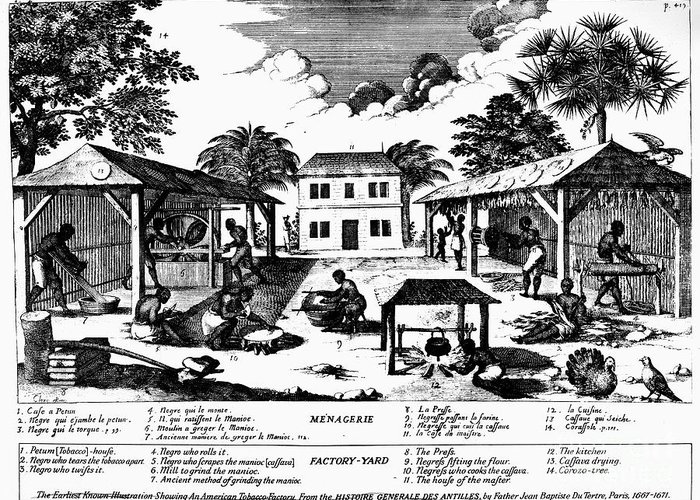 1670 Greeting Card featuring the photograph Tobacco Plantation, C1670 by Granger
