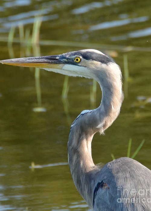 Heron Greeting Card featuring the photograph Too Close For Comfort by Carol Bradley