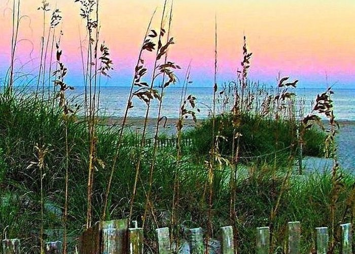 Topsail Island Greeting Card featuring the photograph Topsail Island Dunes And Sand Fence by Julie Dant