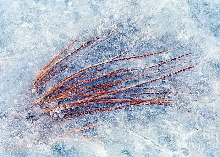 Ice Greeting Card featuring the photograph Trapped In Winter by Mike Dawson