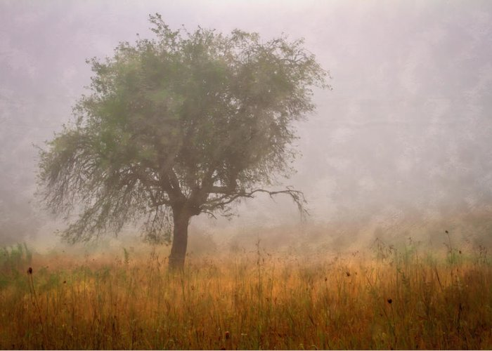 Barn Greeting Card featuring the photograph Tree In Fog by Debra and Dave Vanderlaan