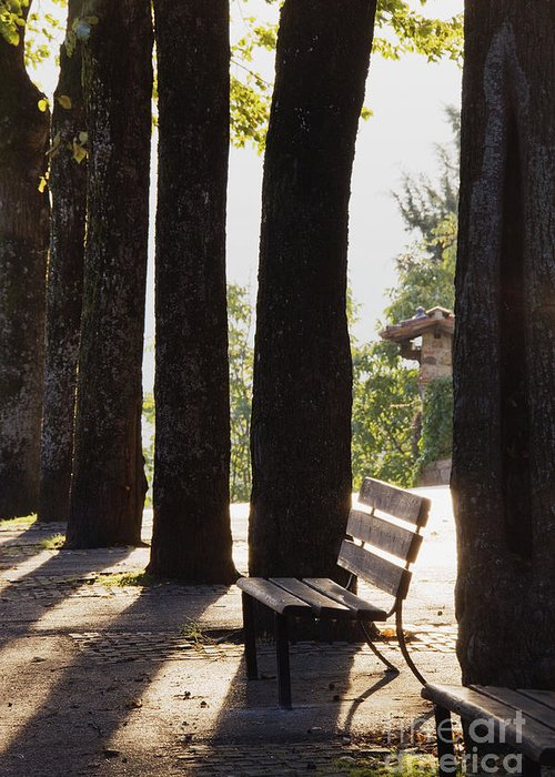 Back Lighting Greeting Card featuring the photograph Trees And Bench by Jeremy Woodhouse