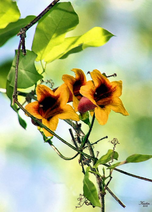 Trumpet Vine Greeting Card featuring the photograph Trumpeting Spring by Kristin Elmquist