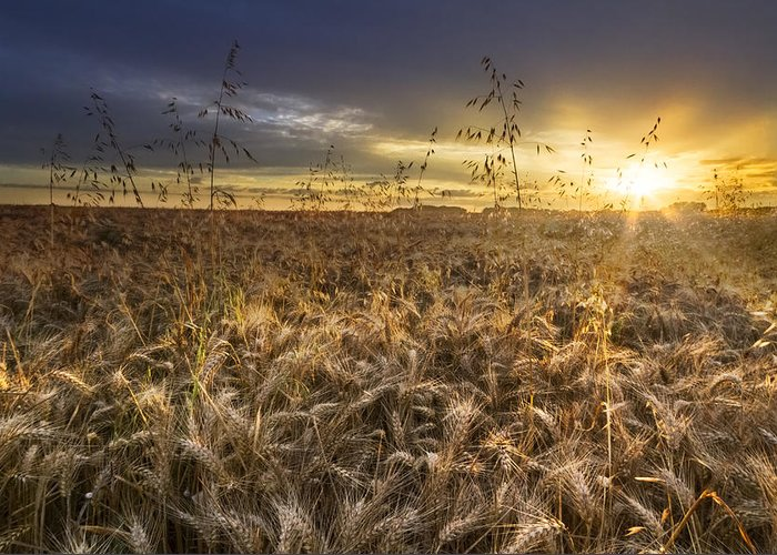 Appalachia Greeting Card featuring the photograph Tumble Wheat by Debra and Dave Vanderlaan