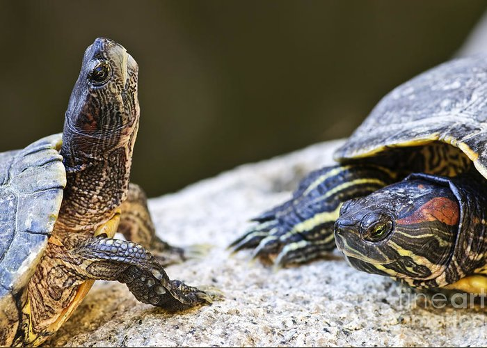 Turtles Greeting Card featuring the photograph Turtle Conversation by Elena Elisseeva