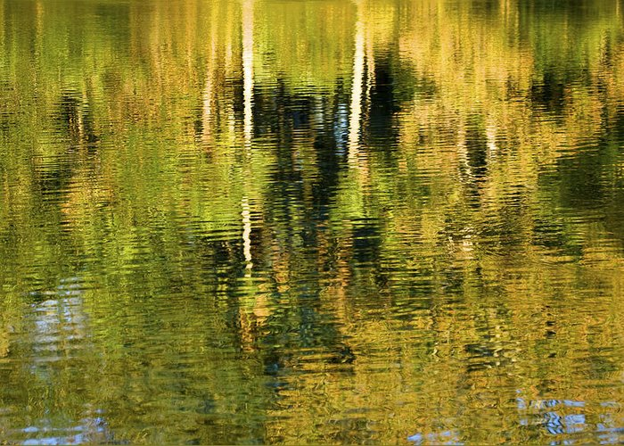 Palms Greeting Card featuring the photograph Two Palms Reflected In Water by Rich Franco