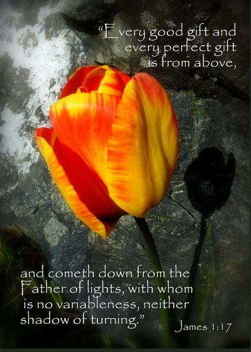 Cindy Greeting Card featuring the photograph Two Tulips Shadow Scripture by Cindy Wright