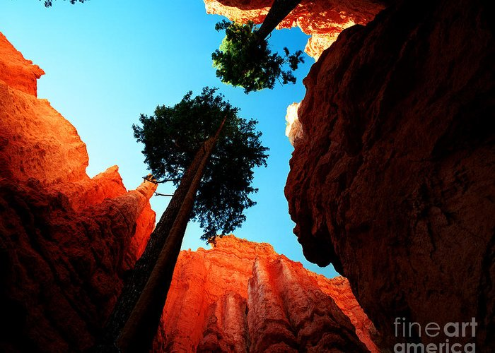 Bryce Canyon National Park Greeting Card featuring the photograph Utah - Navajo Loop 4 by Terry Elniski