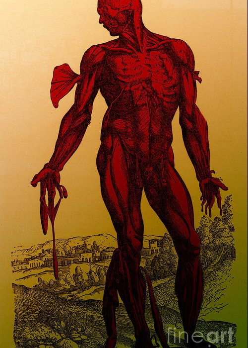 Historical Image Greeting Card featuring the photograph Vesalius De Humani Corporis Fabrica by Science Source