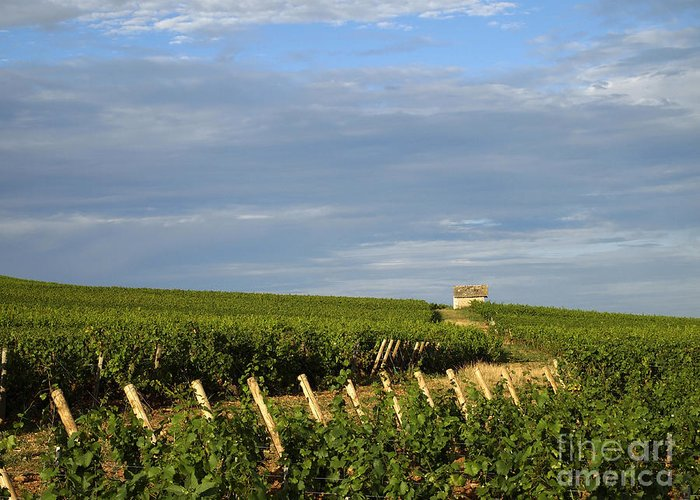 Growth Greeting Card featuring the photograph Vines In Burgundy. France by Bernard Jaubert