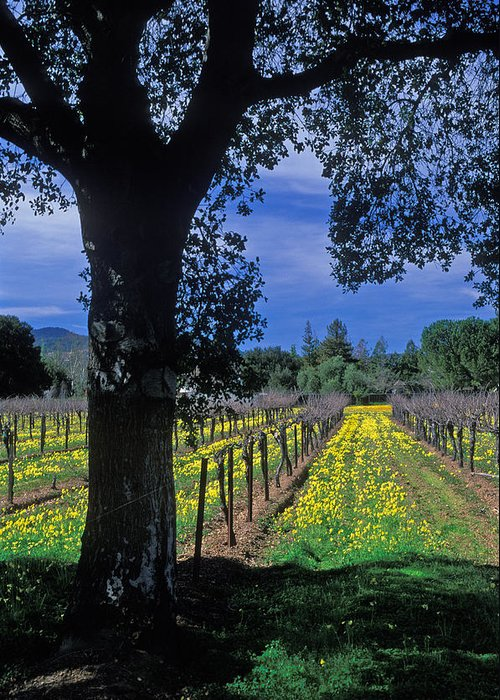 Landscapes Greeting Card featuring the photograph Vineyard View by Kathy Yates