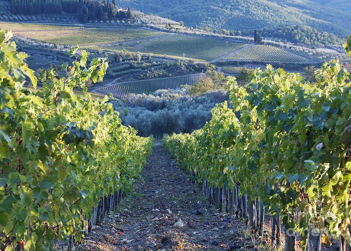 Alcohol Greeting Card featuring the photograph Vineyards by Jeremy Woodhouse