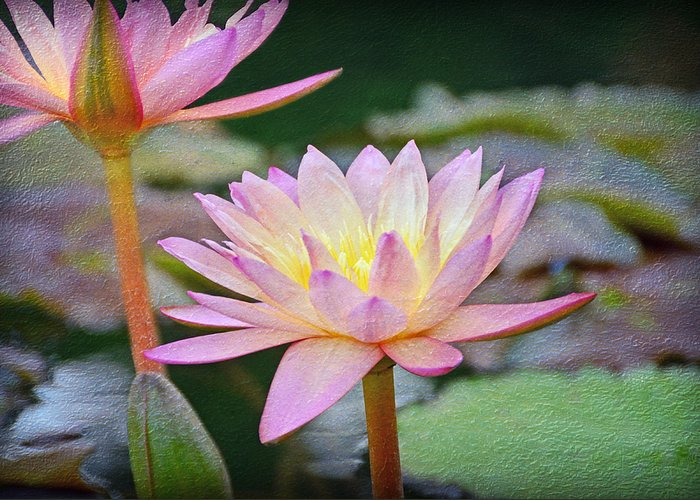 Floral Greeting Card featuring the photograph Water Lilies by Steven Michael