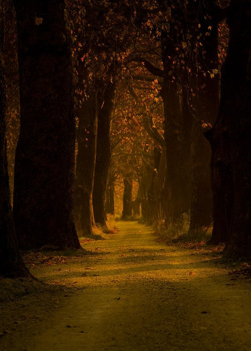 Road Greeting Card featuring the photograph Way In The Forest by Zafer GUDER