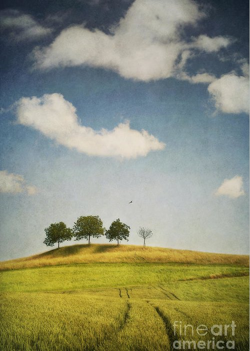 Trees Greeting Card featuring the photograph We Are 4 by Priska Wettstein