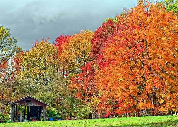 West Virginia Greeting Card featuring the photograph West Virginia Maples 2 by Steve Harrington