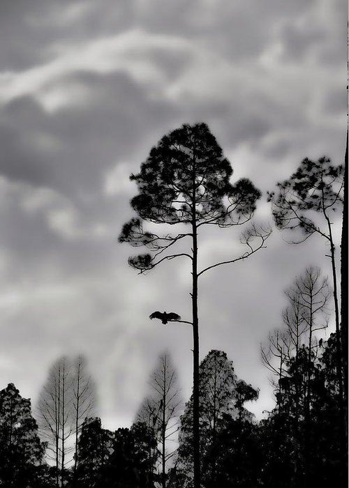 Landscapes Greeting Card featuring the photograph When The Air Gets Too Thin by Jan Amiss Photography