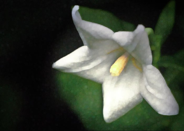 Balloon Flower Greeting Card featuring the photograph White Balloon Flower-faux Painting by Onyonet Photo Studios