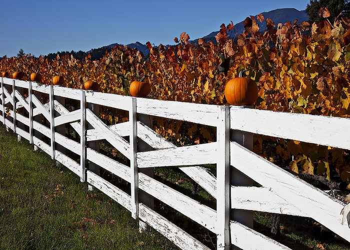 Fence Greeting Card featuring the photograph White Fence With Pumpkins by Garry Gay