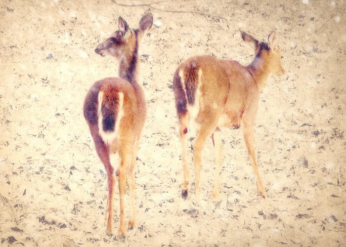 White-tailed Deer Greeting Card featuring the photograph White Tails In The Snow by Amy Tyler