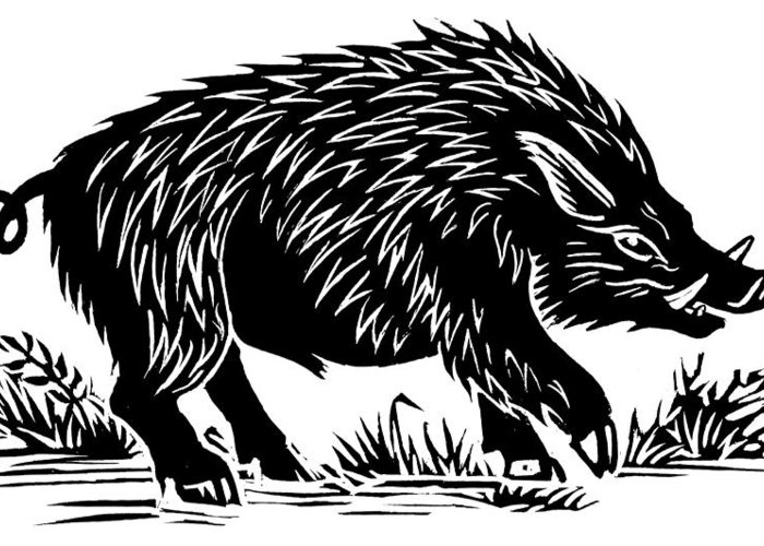 Sus Scrofa Greeting Card featuring the photograph Wild Boar, Woodcut by Gary Hincks