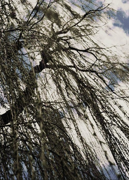 Willow Tree Greeting Card featuring the photograph Willow Tree by Todd Sherlock