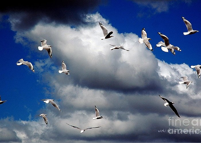 Vickiferrari Greeting Card featuring the photograph Wind Sailing Seagulls by Vicki Ferrari