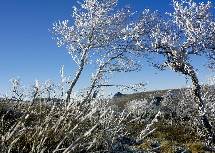 Wintry Greeting Card featuring the photograph Winter Landscape. Auvergne. France by Bernard Jaubert