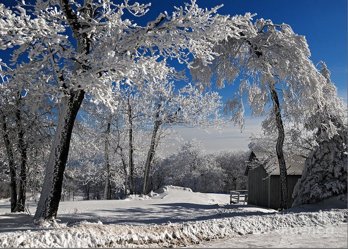 Winter Morning Greeting Card featuring the photograph Winter Morning by Lois Bryan
