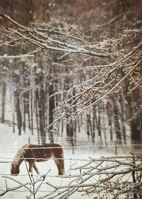 Atmosphere Greeting Card featuring the photograph Winter Scene With Horse Grazing In Wooded Pasture by Sandra Cunningham