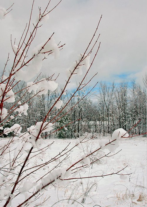 Winter Scene Greeting Card featuring the photograph Winter Woods by Joann Vitali