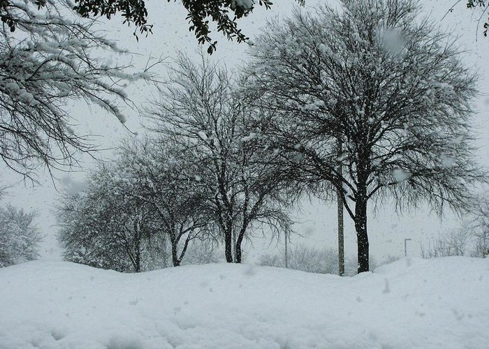 Record Snow In Texas 2011 Greeting Card featuring the photograph Winterlude by Shawn Hughes