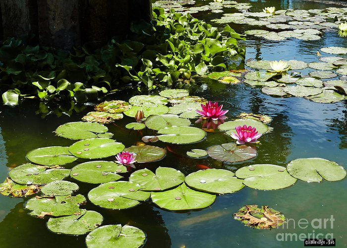 Wishes Among The Water Lilies Greeting Card featuring the photograph Wishes Among The Water Lilies by Methune Hively