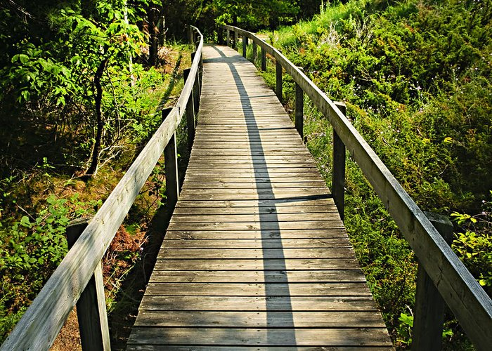 Forest Greeting Card featuring the photograph Wooden Walkway Through Forest by Elena Elisseeva