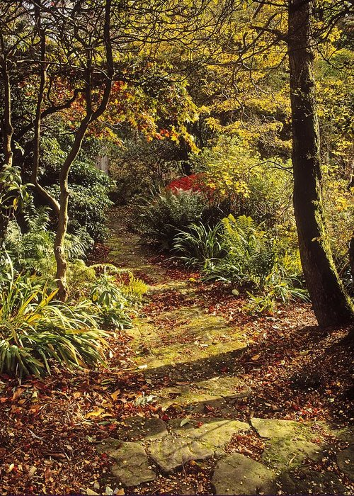 Mount Stewart Greeting Card featuring the photograph Woodland Path, Mount Stewart, Ards by The Irish Image Collection