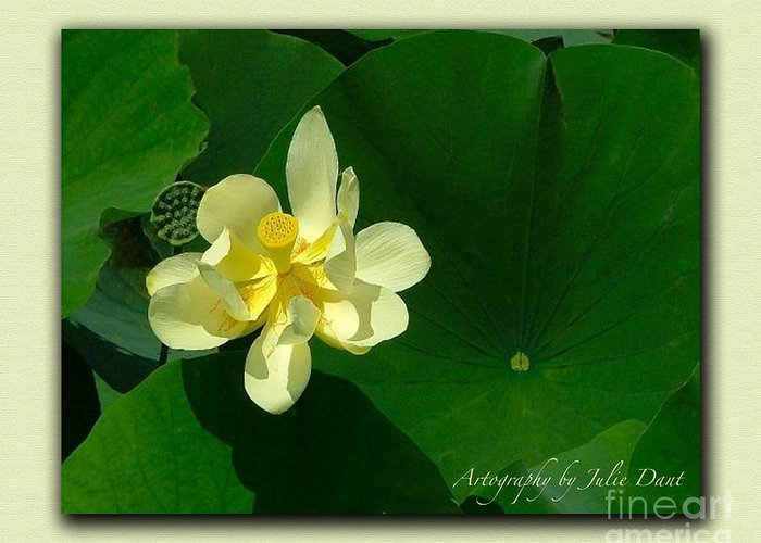 Flowers Greeting Card featuring the photograph Yellow Lotus Blossom In Mississippi by Julie Dant