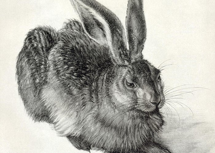 Durer Greeting Card featuring the photograph Young Hare, By Durer by Sheila Terry