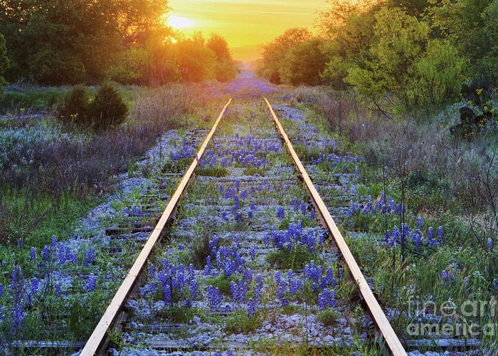 Beautiful Greeting Card featuring the photograph Blue Bonnets On Railroad Tracks by Jeremy Woodhouse