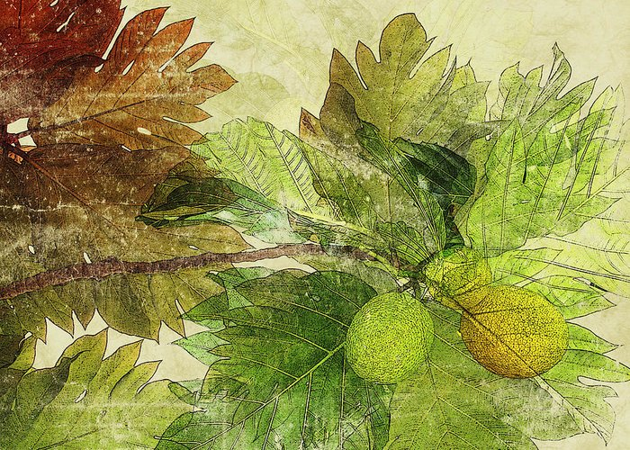 Breadfruit Greeting Card by Kaypee Soh - Printscapes