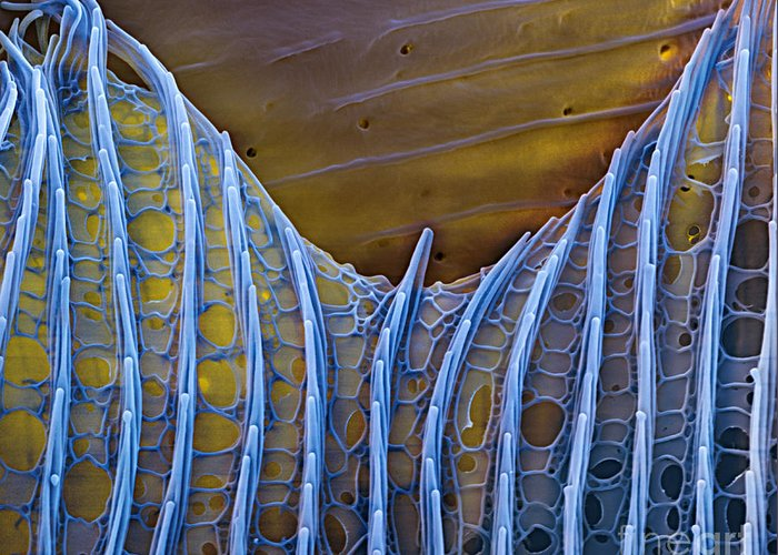 Science Greeting Card featuring the photograph Butterfly Wing Scale Sem by Eye of Science