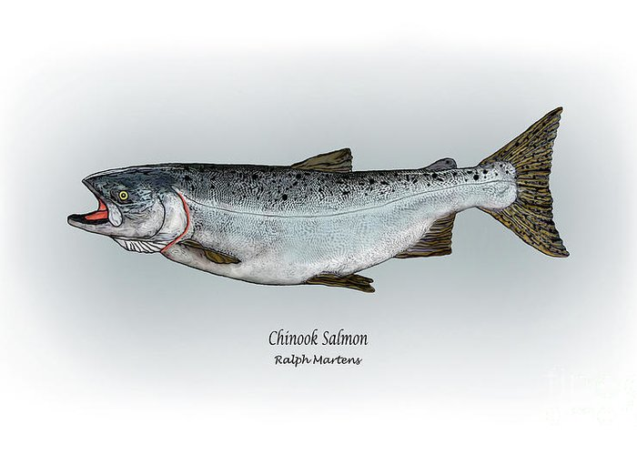 Chinook Salmon Greeting Card featuring the painting Chinook Salmon by Ralph Martens
