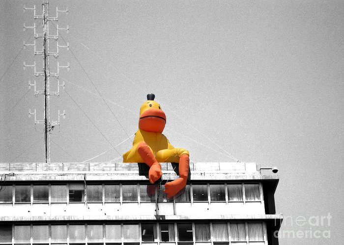 Israel Greeting Card featuring the photograph Duck View by Stav Stavit Zagron