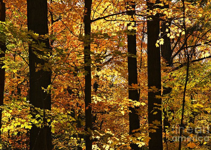 Fall Greeting Card featuring the photograph Fall Forest by Elena Elisseeva