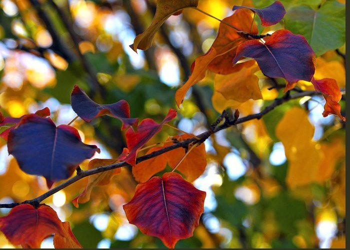 Leaf Greeting Card featuring the photograph Leaves Of Autumn by Stephen Anderson