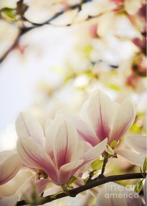 Magnolia Greeting Card featuring the photograph Magnolia by Jelena Jovanovic