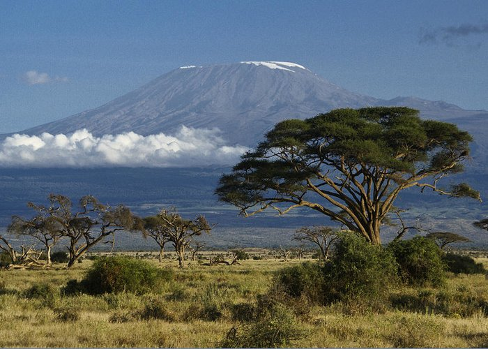 Africa Greeting Card featuring the photograph Mount Kilimanjaro by Michele Burgess