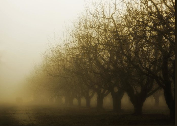 Sepia Greeting Card featuring the photograph Orchard In Fog by Rebecca Cozart