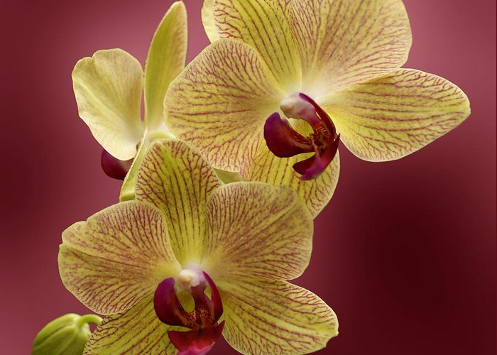 Flower Greeting Card featuring the photograph Orchid by Sandy Keeton