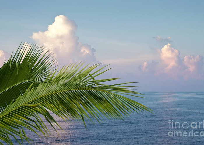 Palm Greeting Card featuring the photograph Palm And Ocean by Blink Images